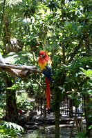 2009_04-16 Animal Kingdom-017.JPG